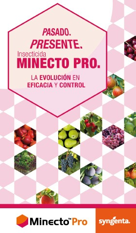 Banner lateral Minecto Pro 2019